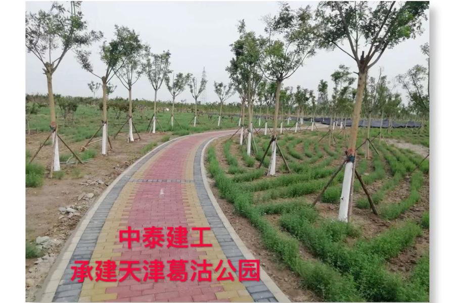 葛沽一中图片_天津葛沽公园市政工程 - 中泰建工